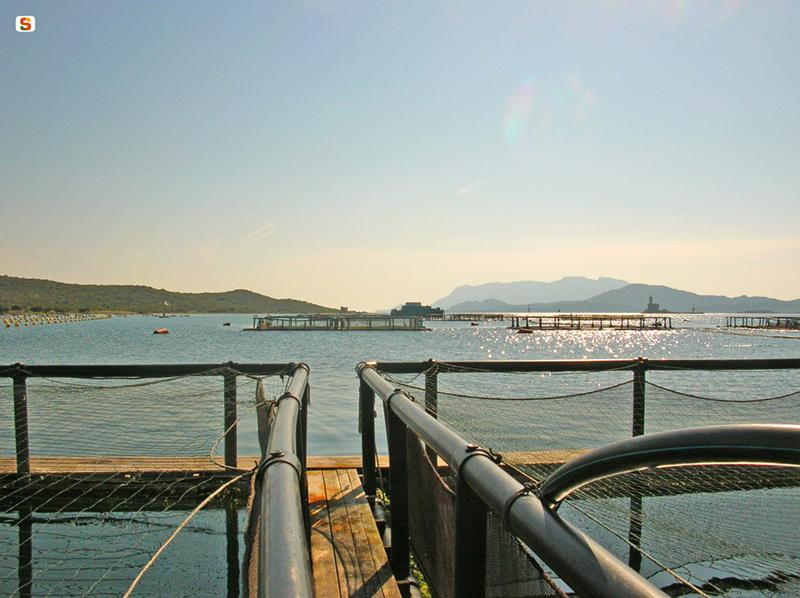 Olbia, impianto per l'acquacoltura - Autore: Viale Iolanda - Foto: SardegnaDigitalLibrary