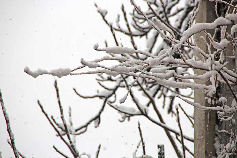 Neve a Dorgali, 31 dicembre 2014 - Foto: Maria Garofano